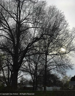 Not so bare trees