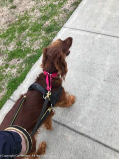 Happy to be walking.