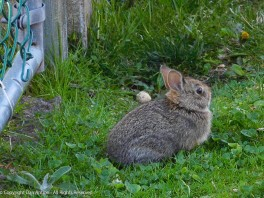 Our baby bunny .