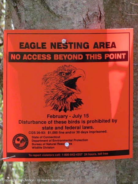 These signs were posted when the eagles first built their next.