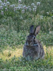 Rabbit Rabbit - Well, he was there, so...