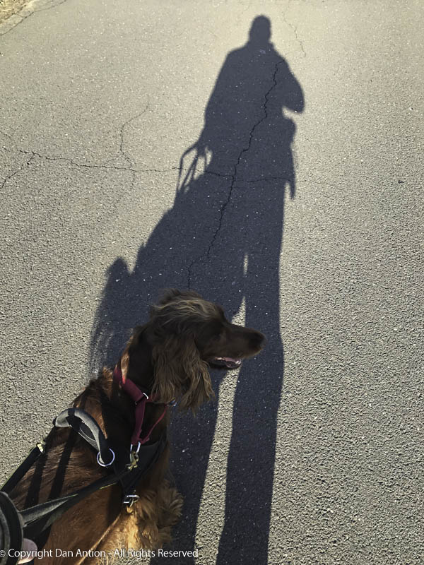 """You keep taking pictures of shadows. It's me they want to see."""