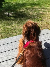 """""""I could chase that squirrel, but it's a nice day and we're relaxing here."""""""