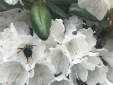 Visiting the rhododendron