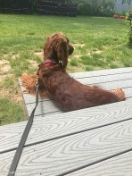 Maddie enjoying her deck.