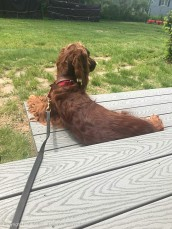 Maddie enjoying her deck.
