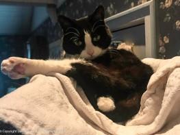 MiMi is quite flexible.