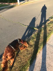 We crossed the street at an unexpected spot. Now we have to sniff.