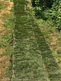 We're not trying for a perfect lawn. I'll put dirt in next to the sod and plant grass in that area,