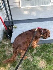 Maddie is inspoecting the lawn debris that has blown onto her deck.
