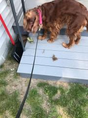 """""""Who put this schmutz on my deck?"""""""