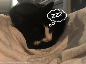 MiMi is asnooze.