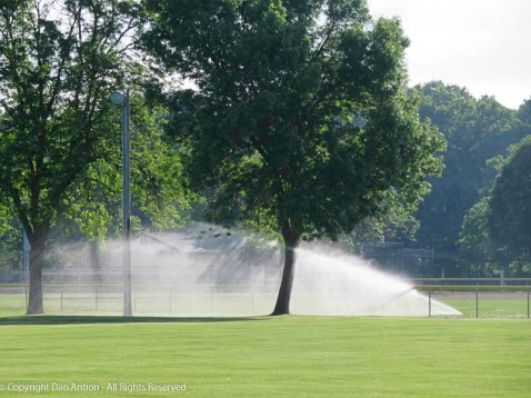 The spray was made a bit more interesting by the sprinkler stream hitting the fence.
