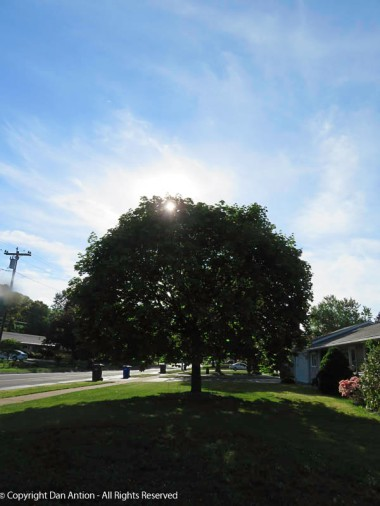 I've been taking a picture of this tree each week since the beginning of spring. Now it fully blocks the sun.