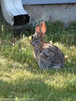 Bunny bunny.