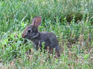 Baby bunny - sooooo cute!