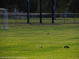 """""""I thought we were playing baseball."""" """"The field is still closed. They opened the soccer field s first."""""""