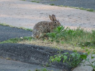 """""""I know that's were we cross, but we don't want to bother the bunny."""""""