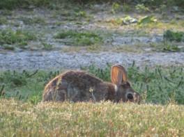 Bunny ears in the sun - the best!