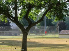 """""""OK, let's go! We can get some batting practice in before the crows get here."""""""