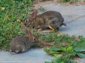 Baby bunny and babier bunny.