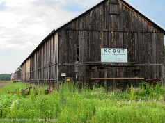 Endless tobacco barns. The sign says Florist and Nurseryman.