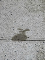 It's a stain, but I think it looks like a bunny.