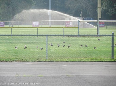 """""""When this fog lifts, we can get some practice before the crows get here."""""""