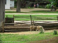 Gates are doors, and sheep are cute, so...