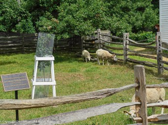 The animals are a significant part of the attraction at OSV.