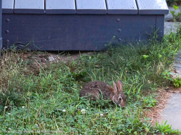 """This little guy is not bothered by the fact that """"weeds"""" are the only thing growing. He likes eating those plants."""