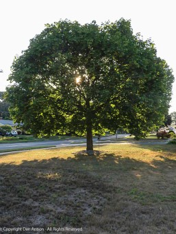 It's only July, but this tree is starting to lose some of its leaves.