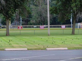 """""""Hey guys, eat up. As soon as the field dries out, we play ball."""""""