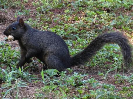 Of course Smokey got a peanut.