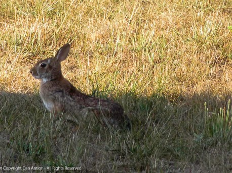It's OK, bunny. You can hang out in the shade. We won't bother you. Rabbit Rabbit.