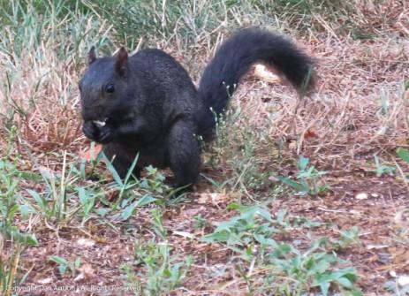Smokey seems to be enjoying his peanut.