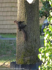 One of Smokey's cousins in a neighborhood tree.