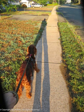 Proper photo - Maddie and her shadow.
