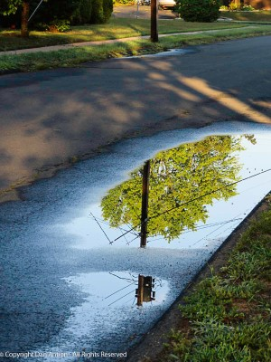 We had a very heavy rain storm. My favorite puddle was much larger than normal.