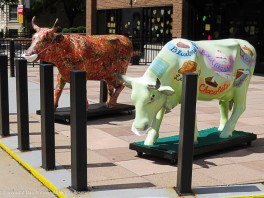 As seen in Hartford. 2020 sign of the times. Moo!