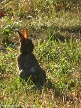 Backlit bunny ears.