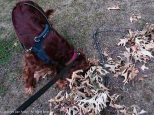 Maddie finds these leaves interesting.