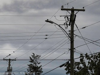 I always wonder why a group of birds picks one pole and a single bird tries another.