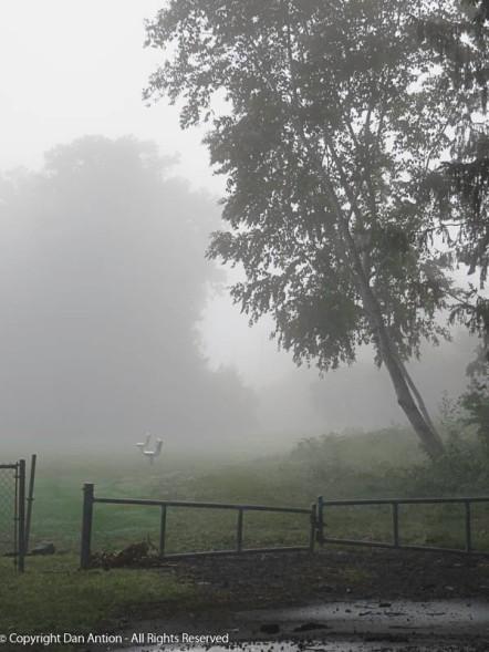 Foggy path.