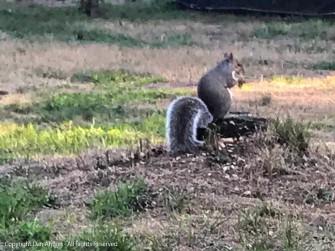 Sammy, eating his peanut.