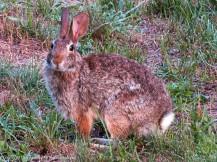 """It's OK bunny. We won't bother you."" Rabbit Rabbit."