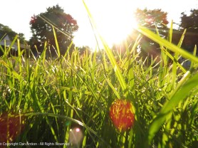 Maddie-eye view of the grass.