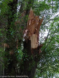 Storm damage from the hurricane.