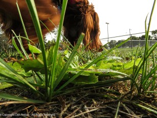 Well, you knew as soon as I tried to get a better angle on this bit of grass and weed, Maddie would insert herself.