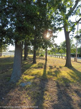 Looking through a little wooded area near the entrance to Veterans Park.